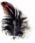 featherred(2)