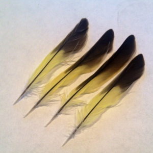 yellowfeathers