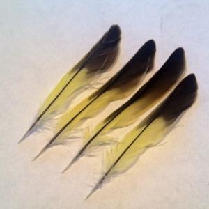 yellowfeathers
